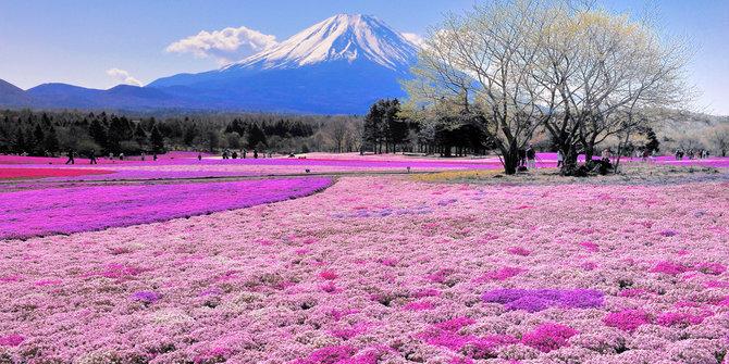 Wajib Tahu Inilah Deretan 5 Bunga Paling Cantik Di Dunia Yahoolavista