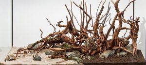 kayu rasamala